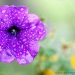 purpleflowerlogo